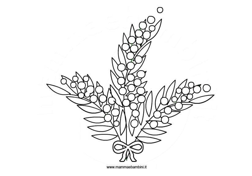 mimose immagini da