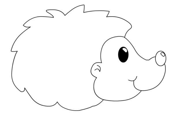 riccio-disegno